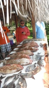Grouper, Snapper, Cobia, Kings Oh MY!